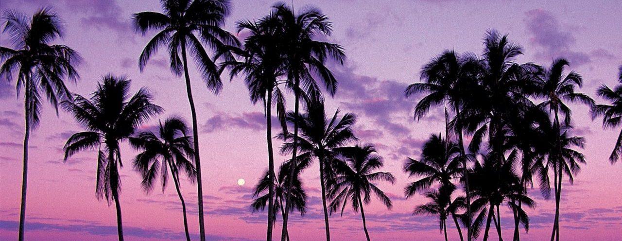 Palm Tree Class